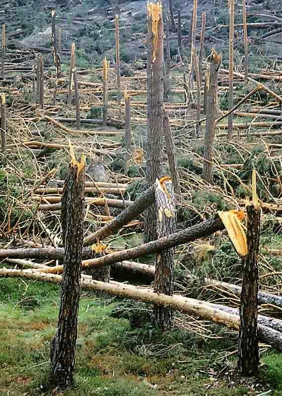 Tornado F3 Pinares Soria, 1 junio de 99, 3